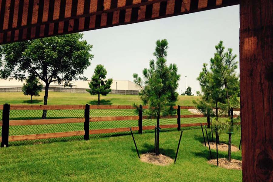 Stained Fence & Pergola