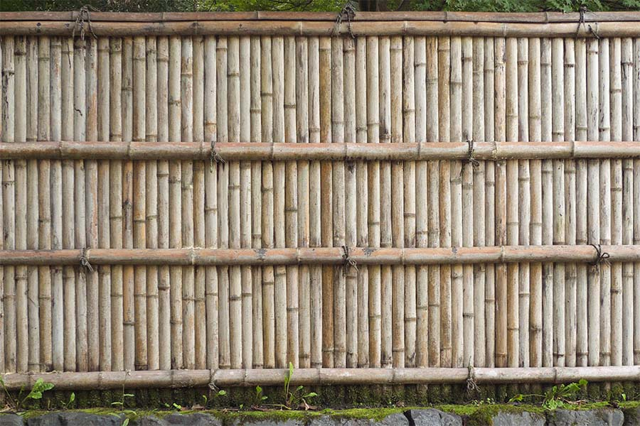 Old Bamboo Fence